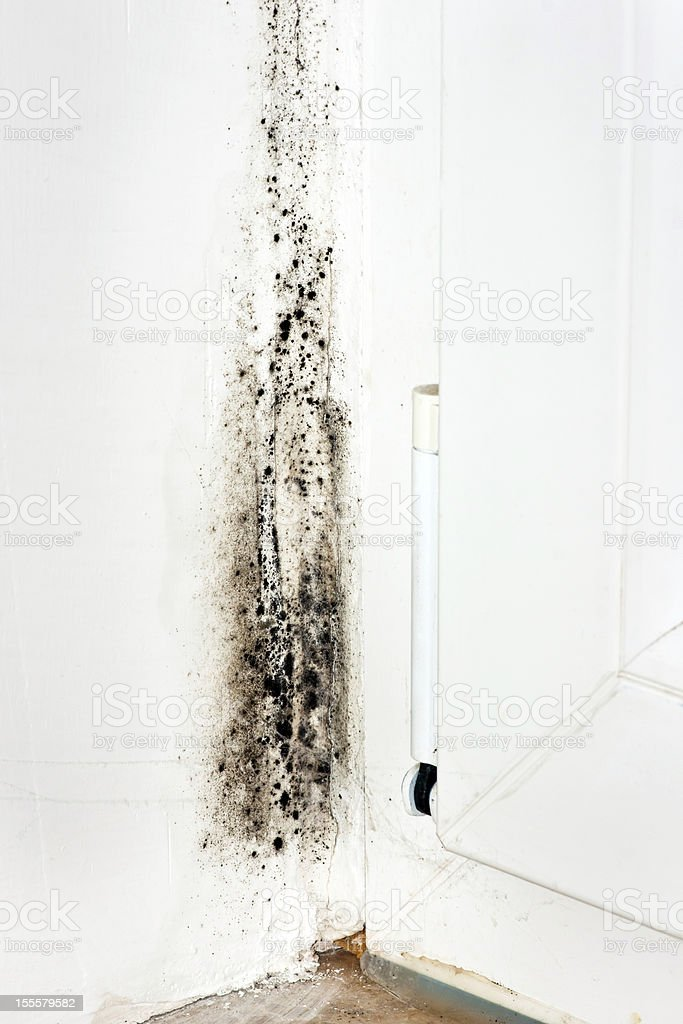 Mold on a white wall in the corner stock photo