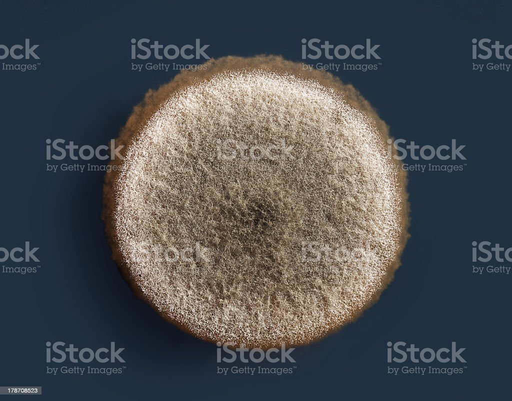 mold on agar royalty-free stock photo