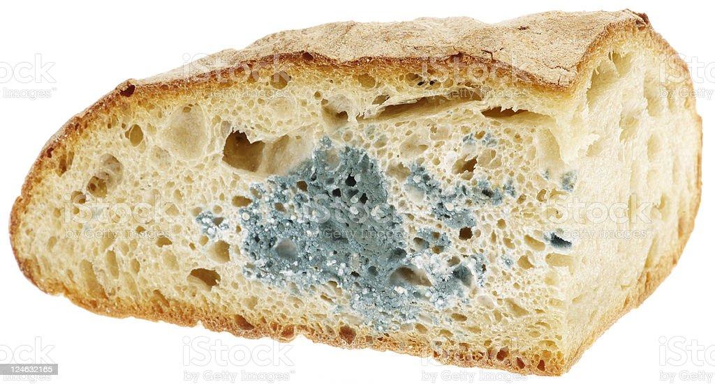 mold on bread royalty-free stock photo