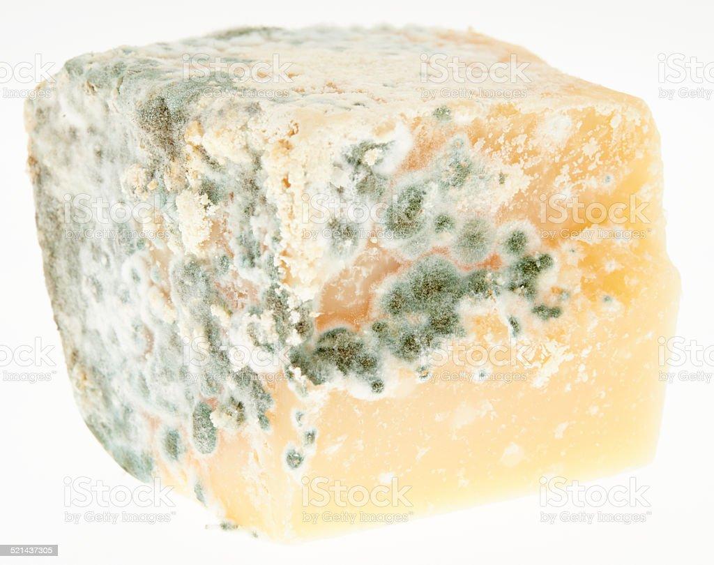 Mold on Cheese stock photo