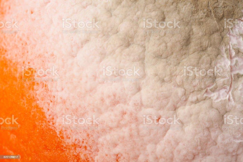 mold on orange as a background close-up macro stock photo