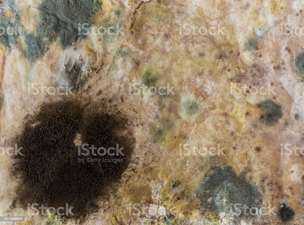 Mold on slices bread. stock photo