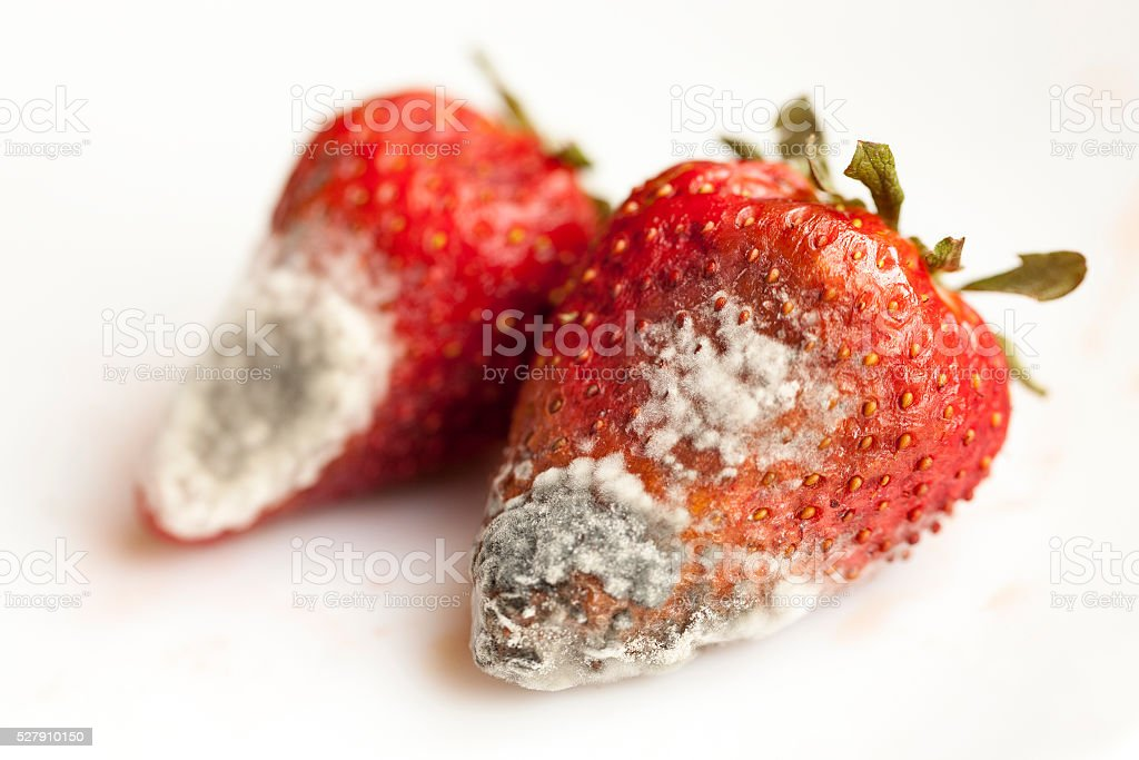 mold on strawberries stock photo