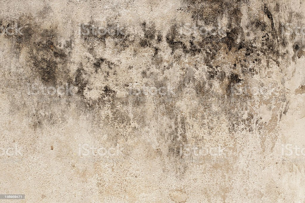 Mold on the wall stock photo