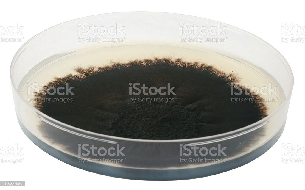 Mold royalty-free stock photo