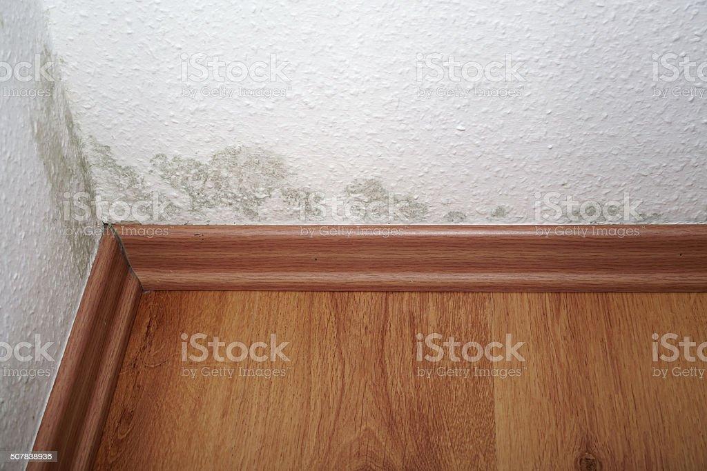 mold stock photo