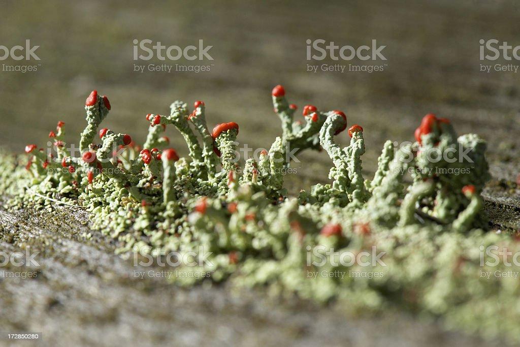 mold spore stock photo