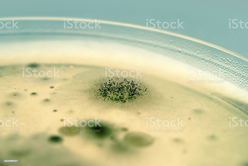 Mold spores and Bacteria close up stock photo