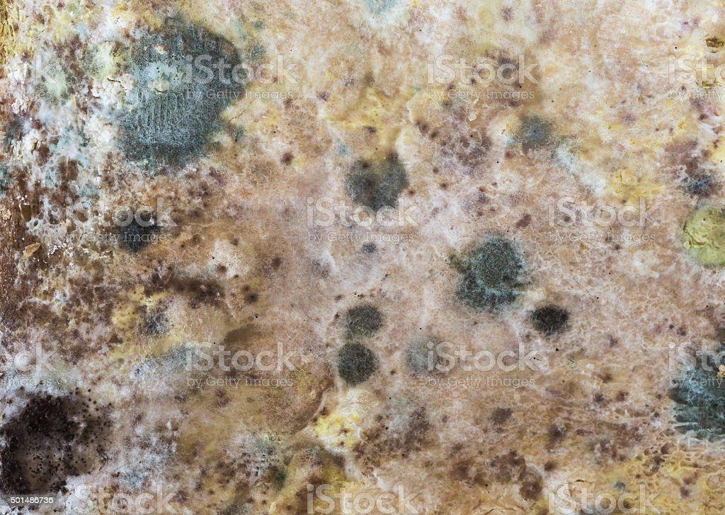 Mold spores on slices bread. stock photo