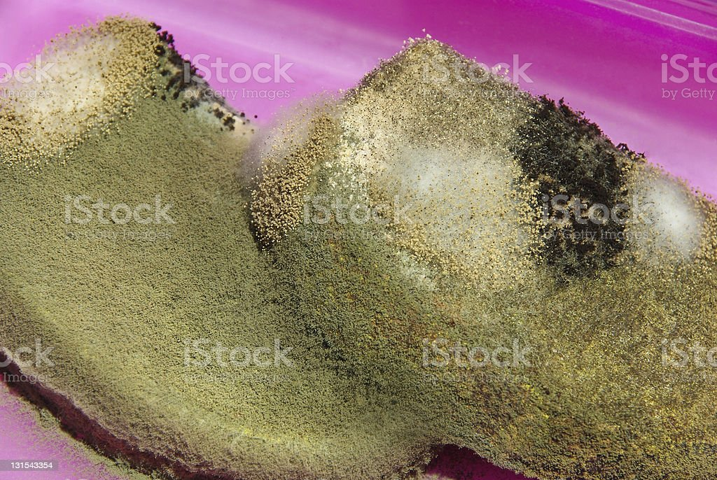 Mold spores royalty-free stock photo