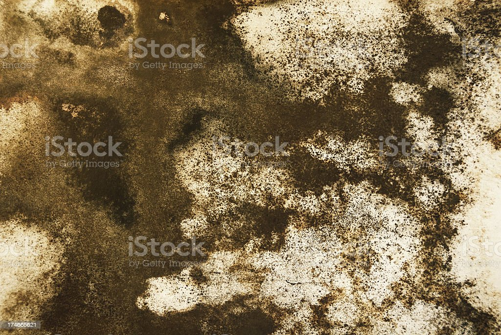 Mold Takeover royalty-free stock photo