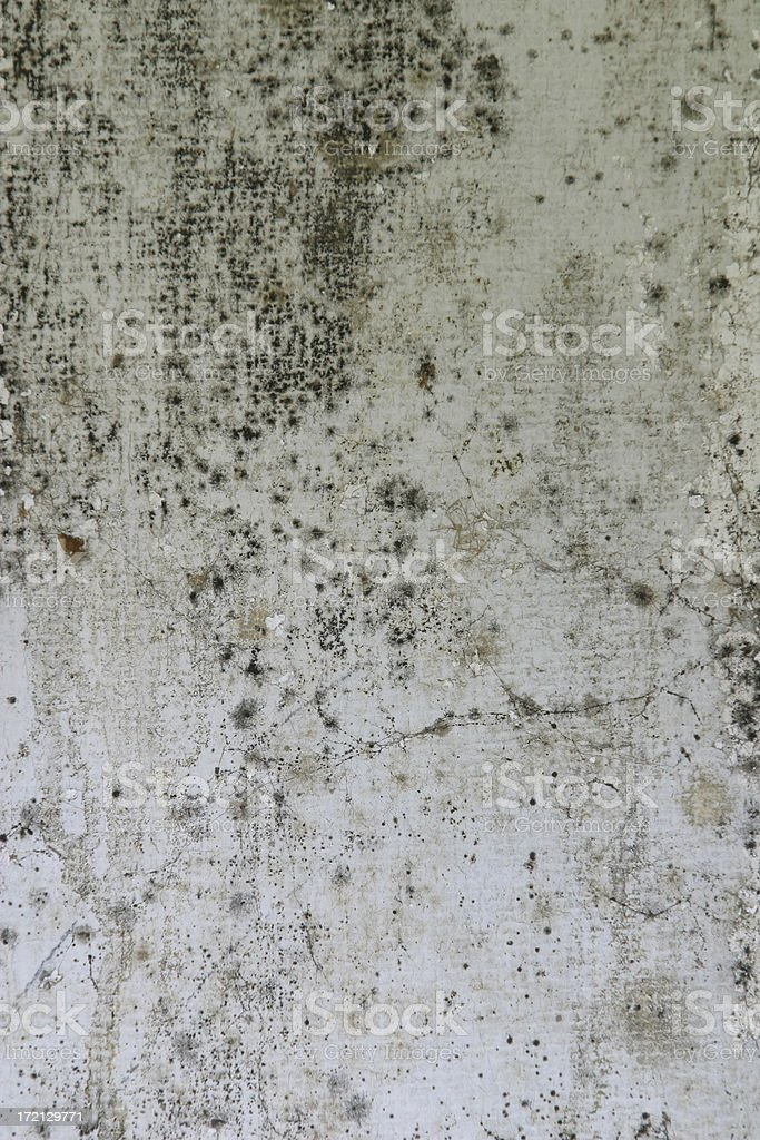 Mold Wall Board Texture royalty-free stock photo