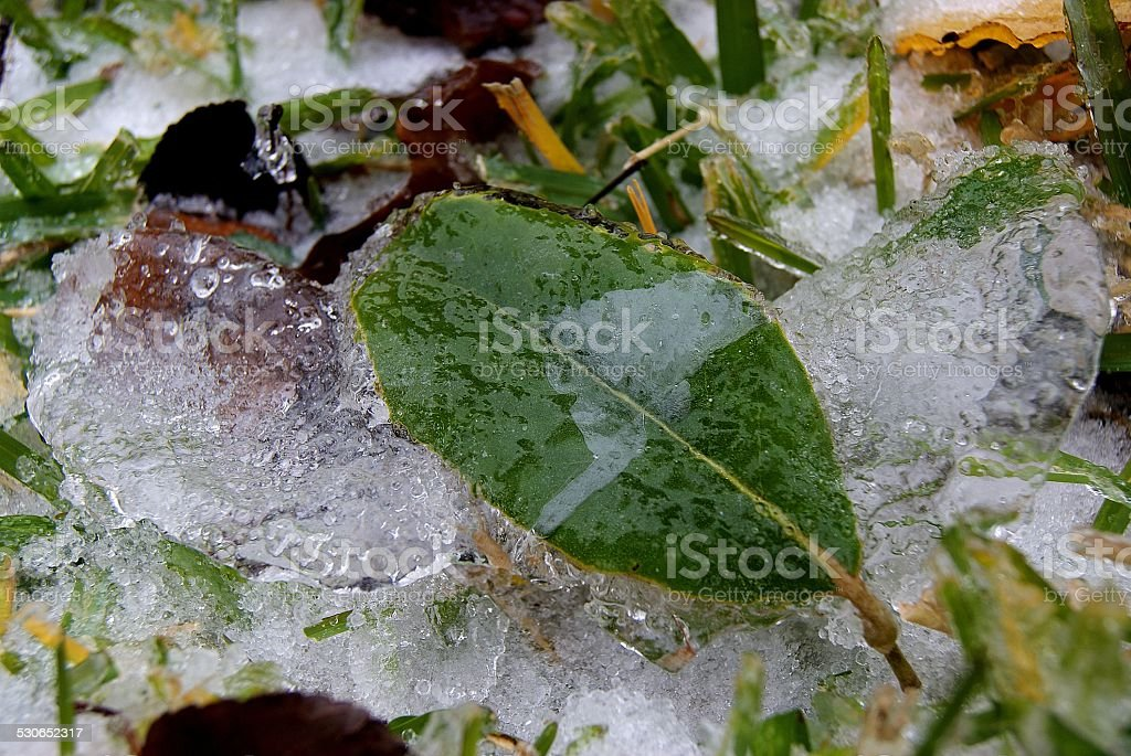 Molded Ice Leaves royalty-free stock photo