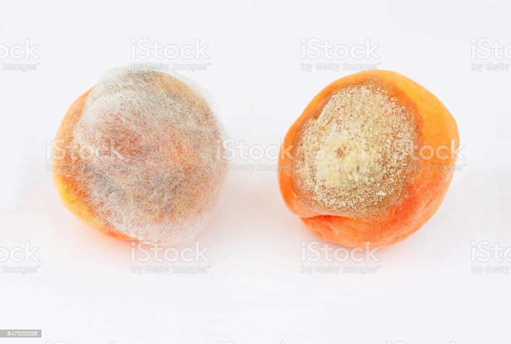 Molded peach on white stock photo