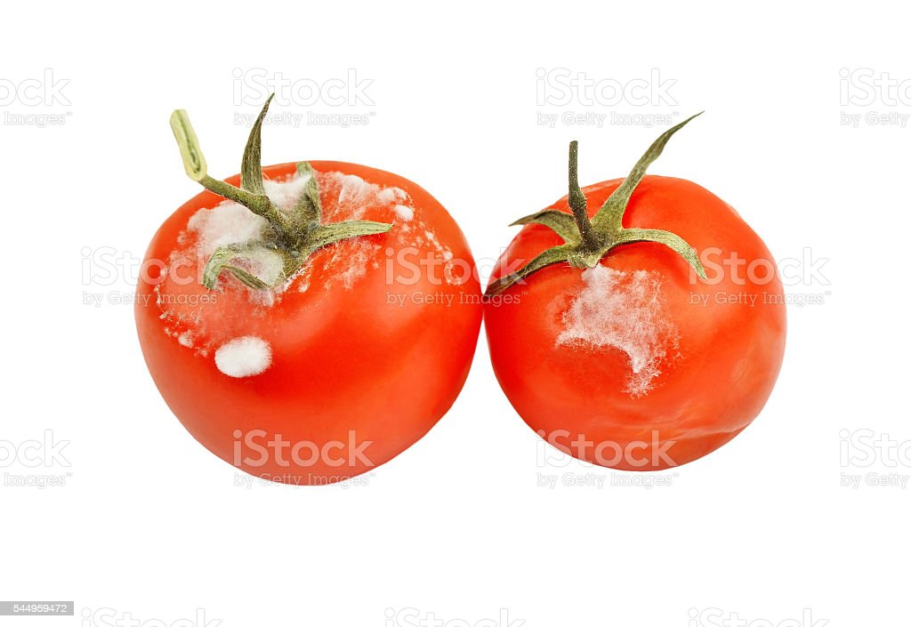Molded red tomato stock photo