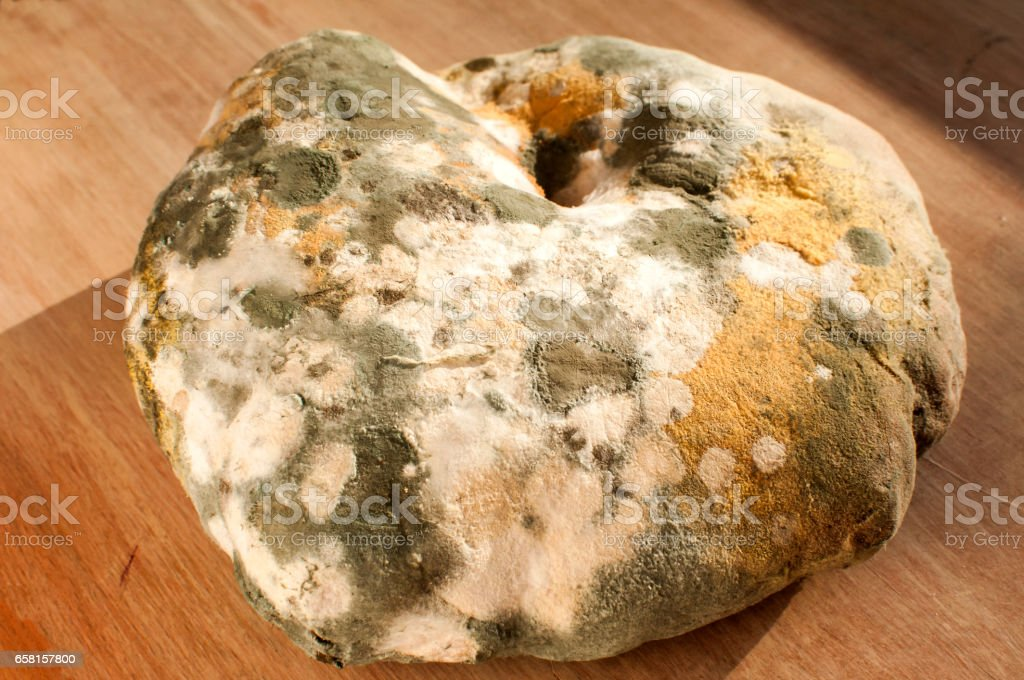 Moldy and musty wheat bread stock photo