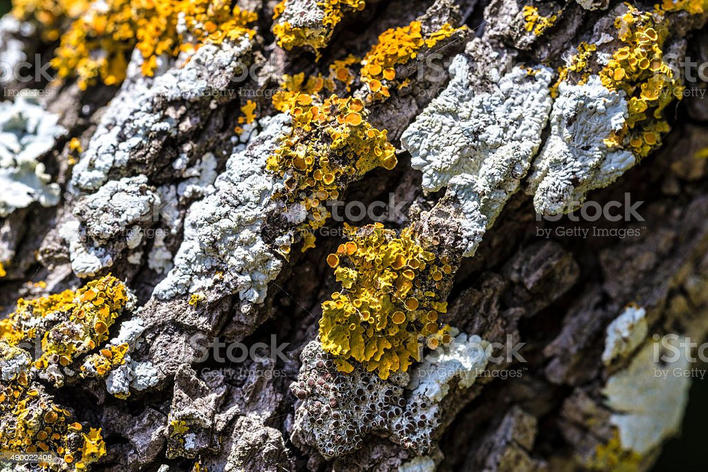 Moldy bark and lichen stock photo