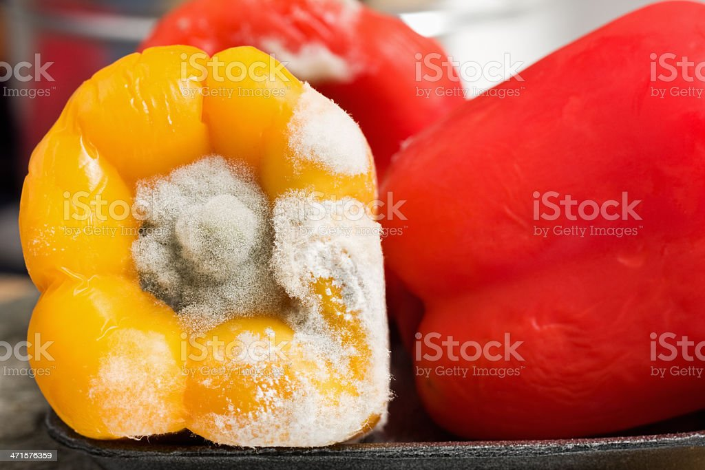 Moldy Bell Pepper royalty-free stock photo