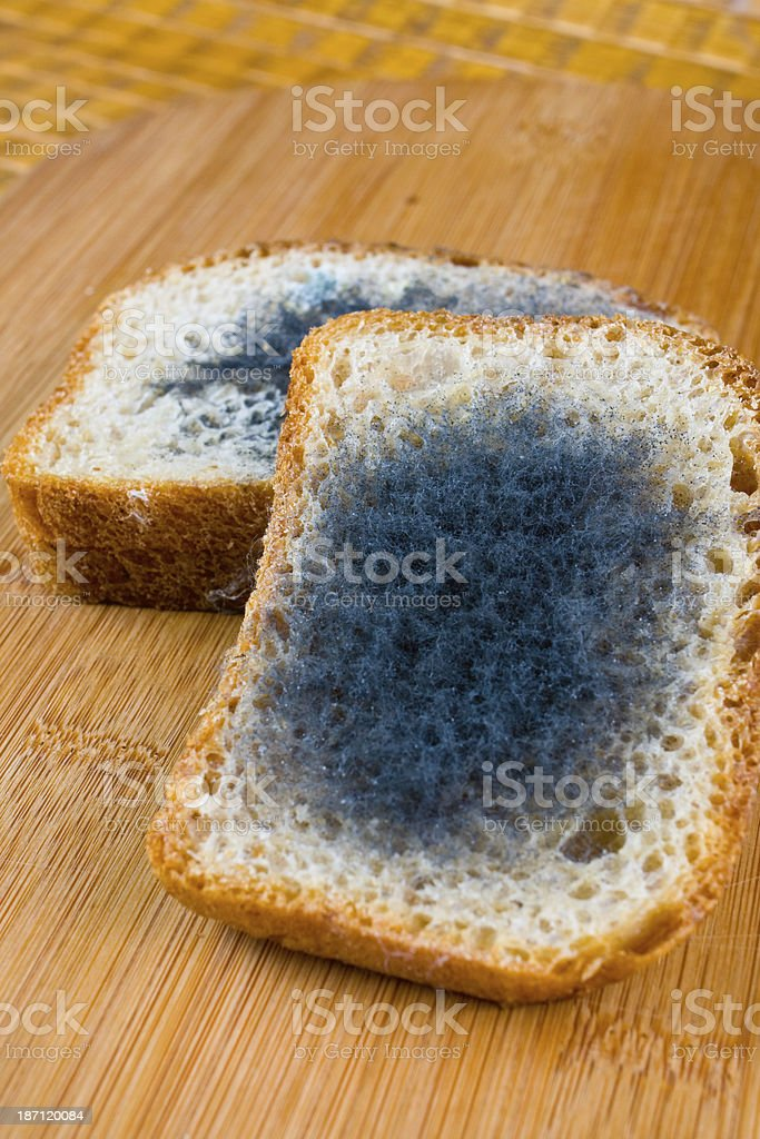 moldy bread on a chopping board royalty-free stock photo