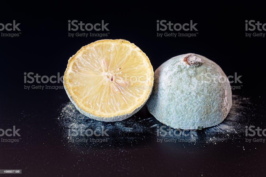 Moldy Lemon Cut in Half stock photo
