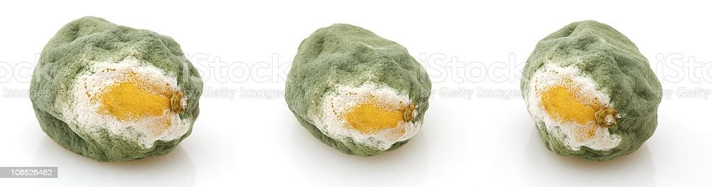 Moldy Lemon - Three different angles stock photo