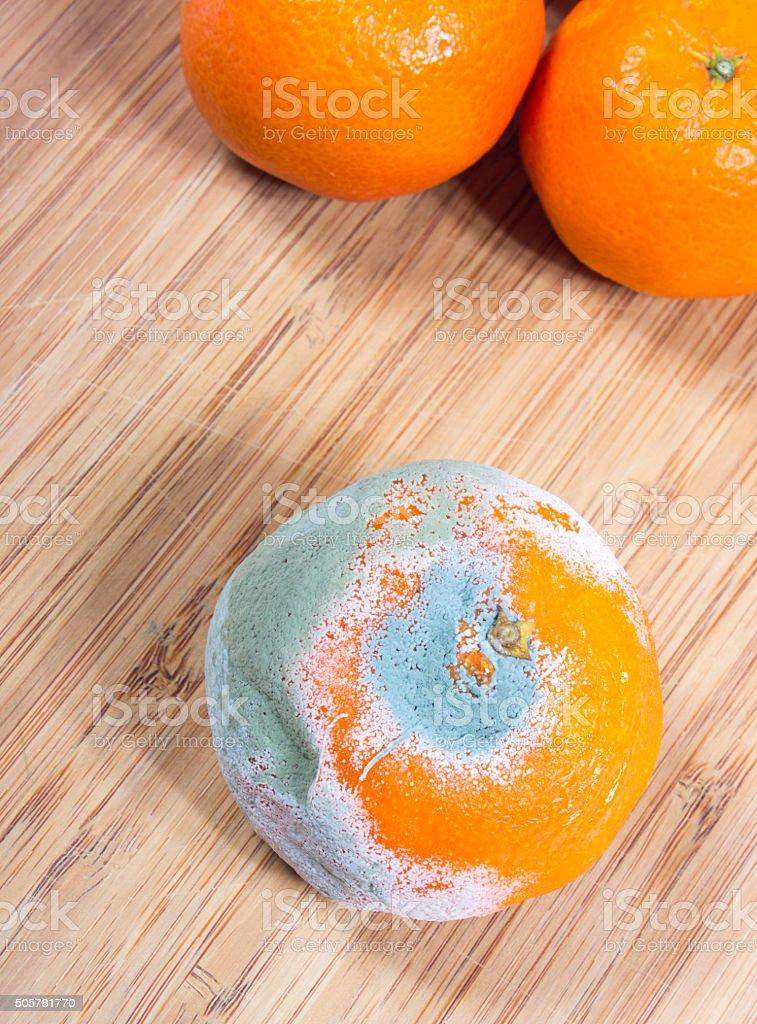 Moldy mandarin on the boards kitchen. stock photo