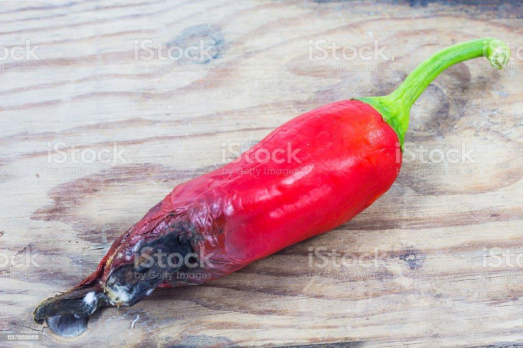 Moldy, Rotten of red chili pepper on wooden background. stock photo