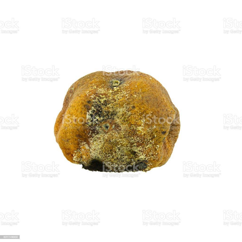 Moldy rotten orange fruit isolated on pure white stock photo