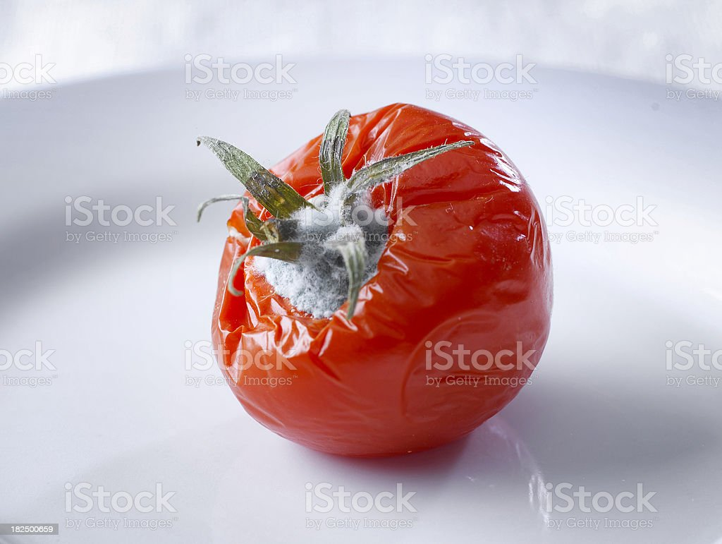 Moldy Tomato royalty-free stock photo