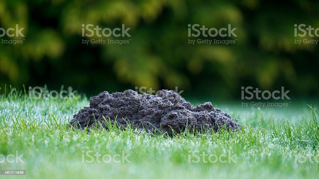 Mole Hill in a garden stock photo
