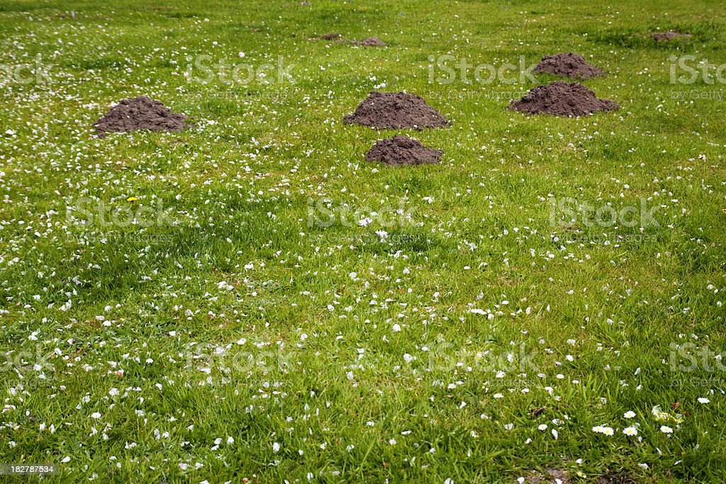 Mole hills with fallen petals on grass royalty-free stock photo