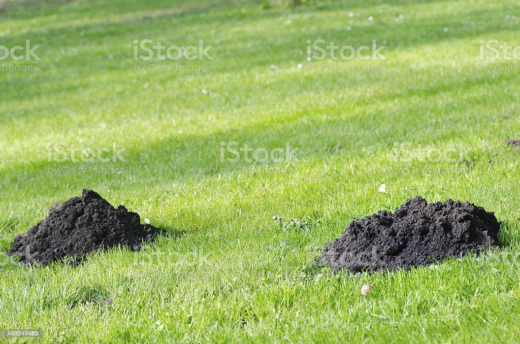 mole molehill stock photo