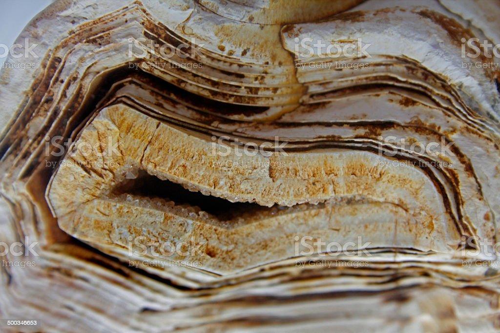 molecular fossils Stromatolite stone stock photo