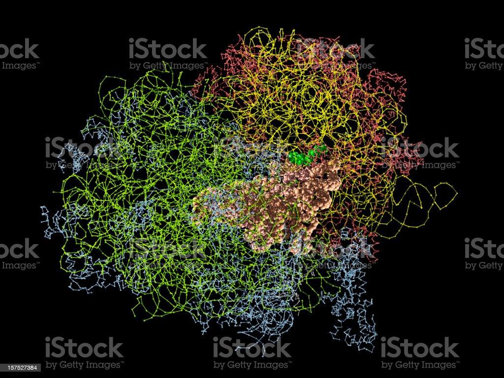 Molecular Model of Ribosome stock photo