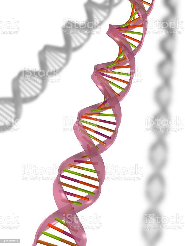 DNA molecular royalty-free stock photo