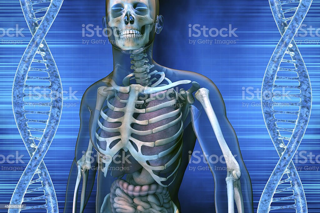 DNA molecule and anatomy men stock photo
