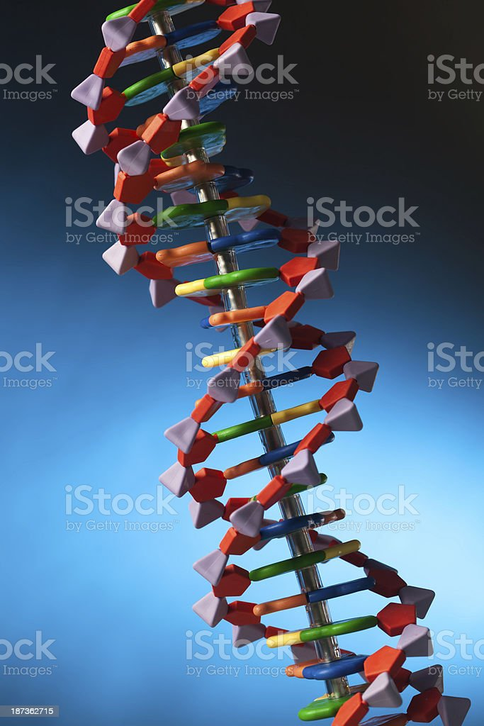 DNA Molecule Double Helix Structure in Blue Background Verticle stock photo