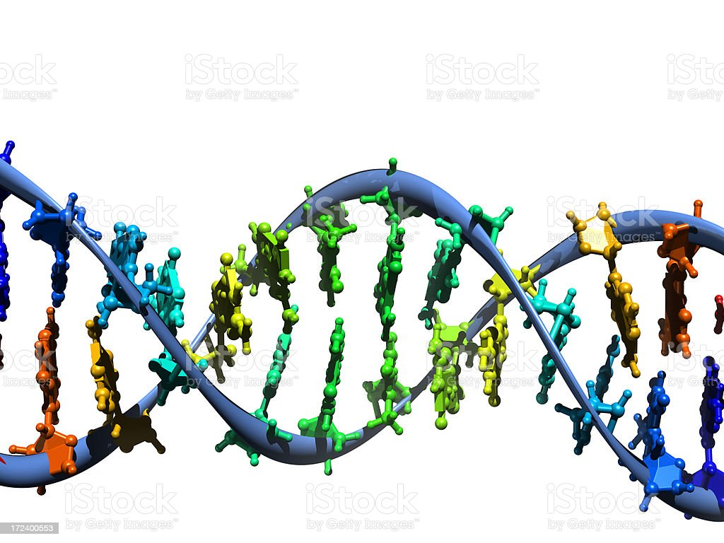 DNA Molecule Model royalty-free stock photo