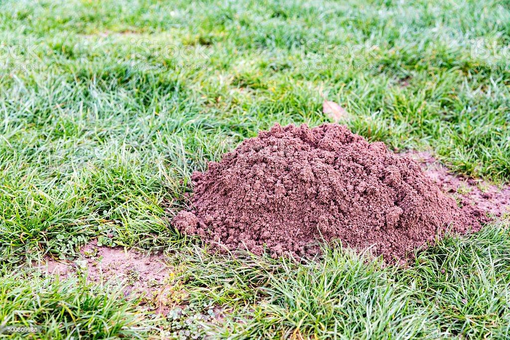Molehill in a garden stock photo