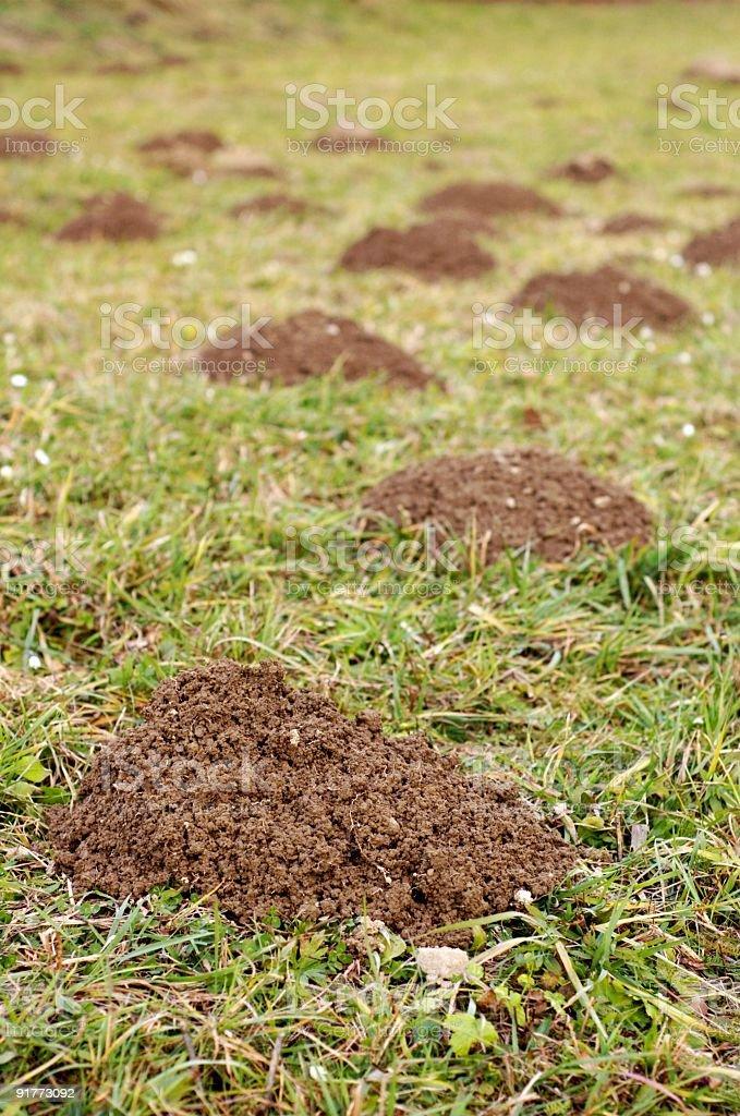 molehill , nature stock photo