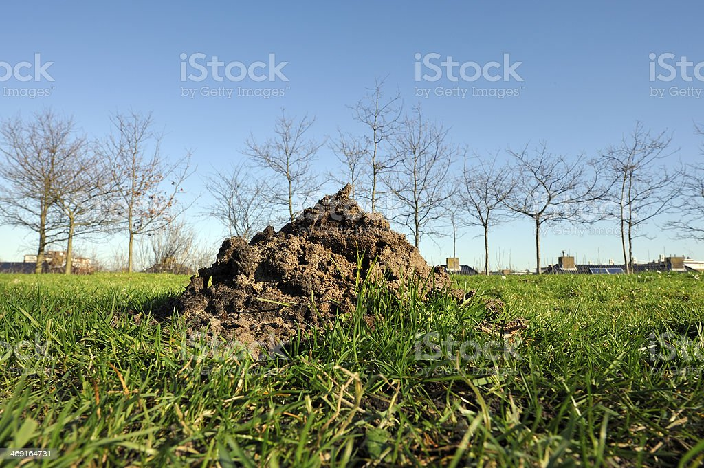 Molehill on green gras stock photo