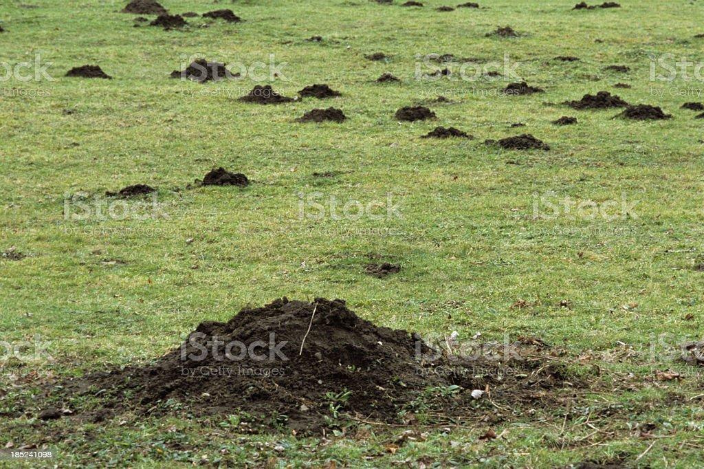 Molehills damage a field stock photo