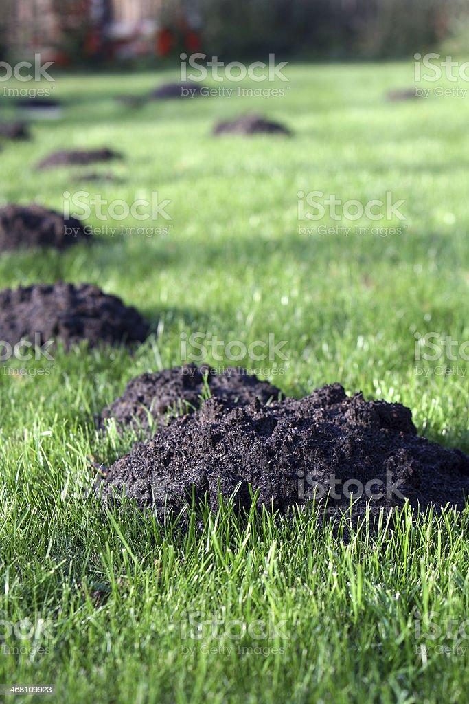 Molehills in an english garden stock photo