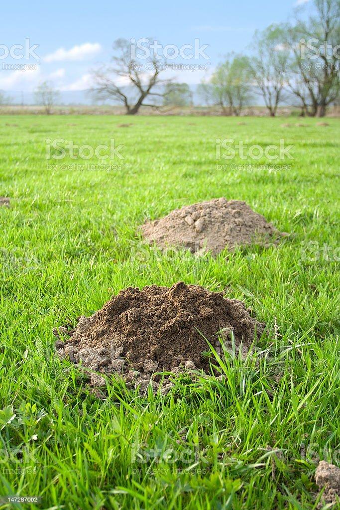Molehills royalty-free stock photo