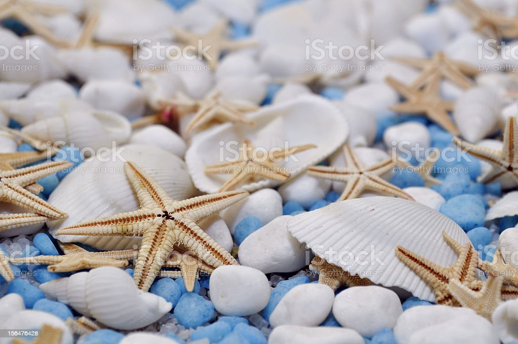 Mollusk remains royalty-free stock photo