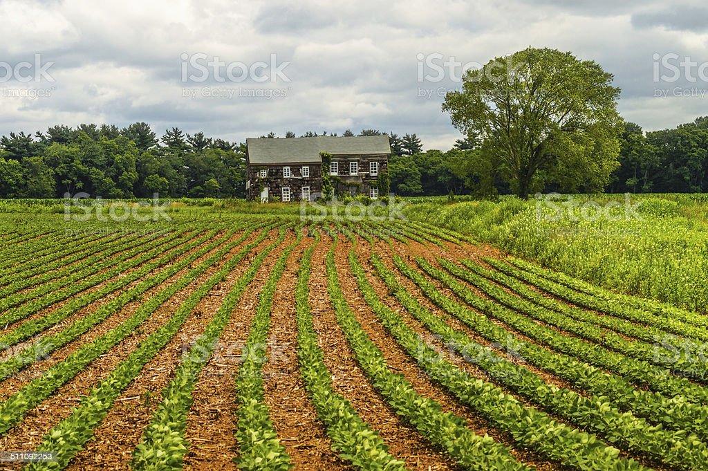 Molly Pitcher Farm stock photo