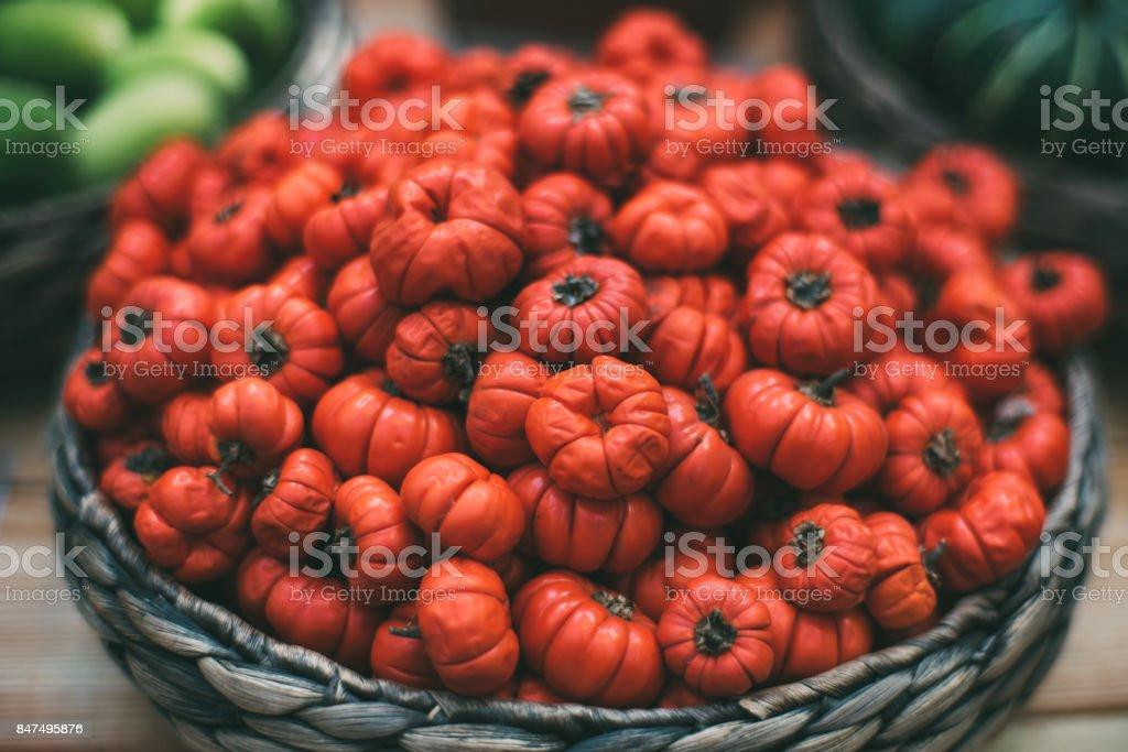 Molly with Solanum aethiopicum stock photo