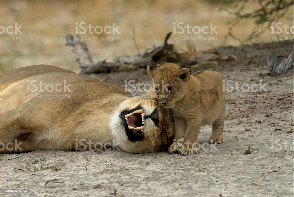 Mom and child playing games royalty-free stock photo