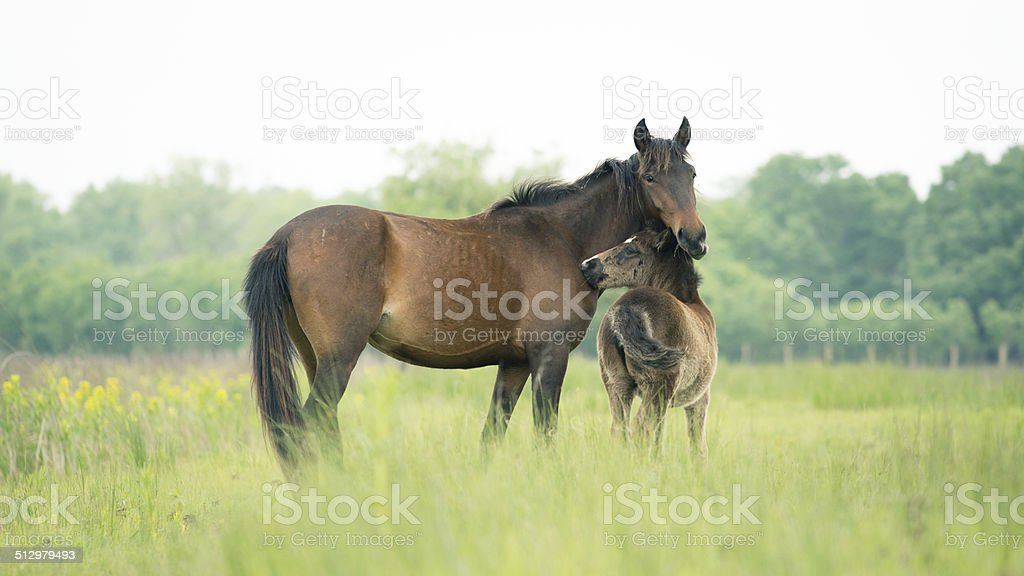Moment between mother and offspring stock photo