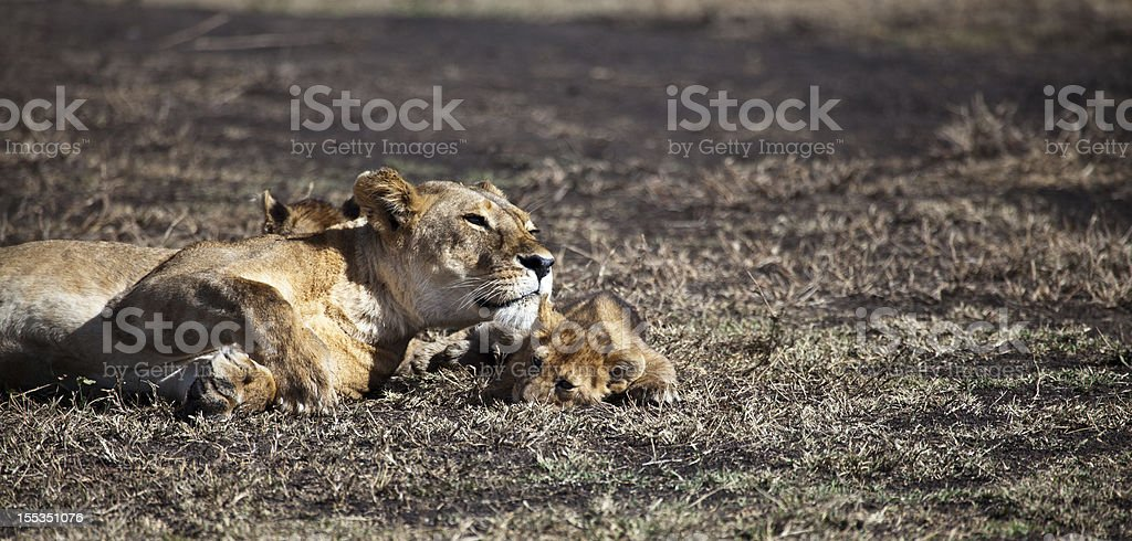 Momma on the Lookout royalty-free stock photo
